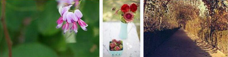 Gartenkalender Bild 8