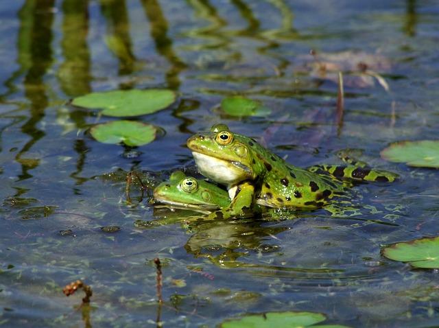 Frosch, Frösche, Amphibien