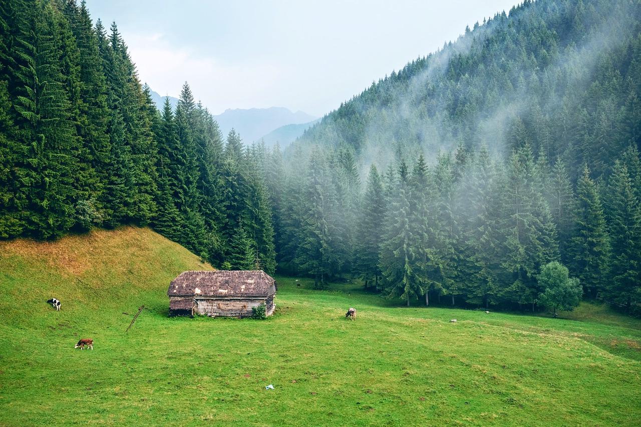 Berge, Morgen, Rasen, Landschaftlich
