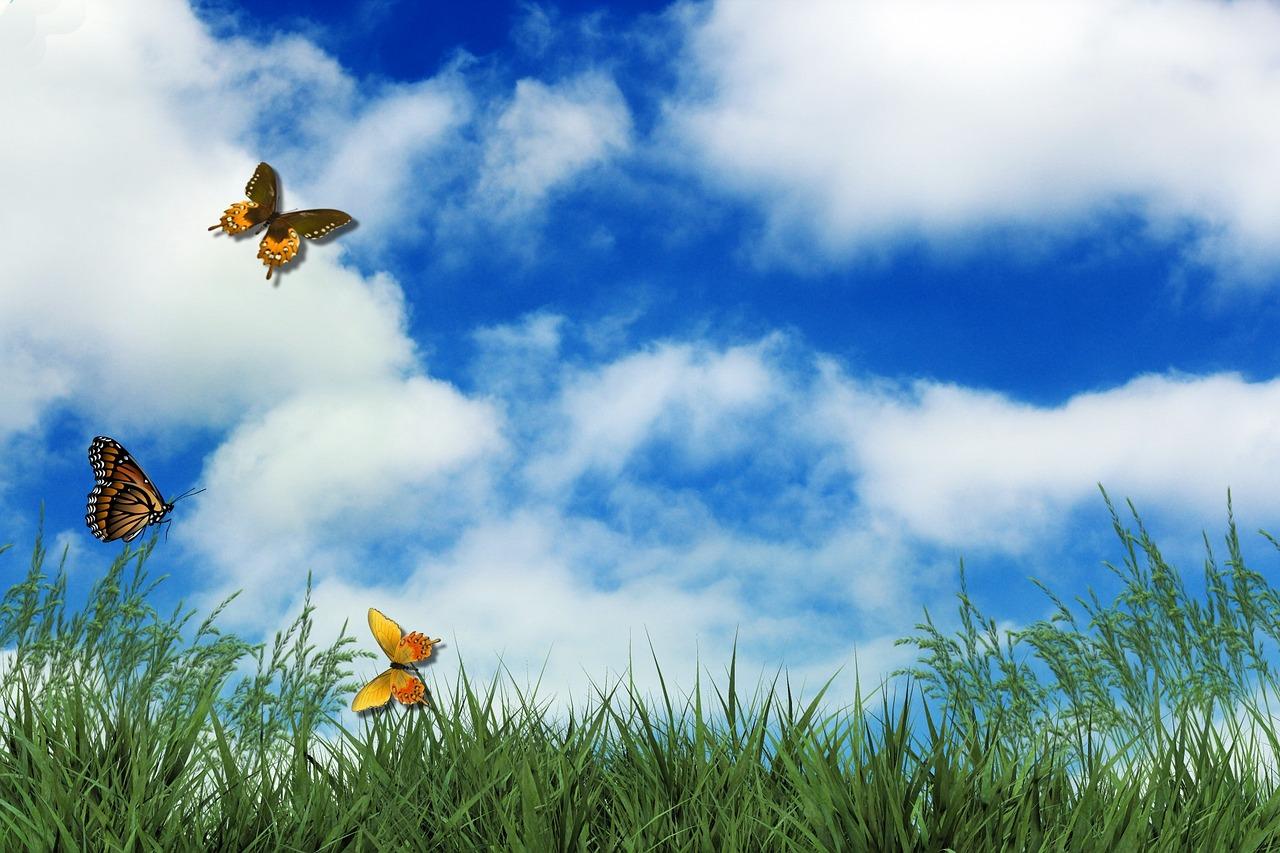 Rasen, Schmetterlinge, Wolken, Himmel